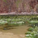 slide-seaweed