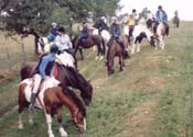 pony riding near 9 Timber Hill in Pembrokeshire